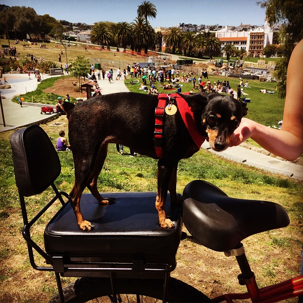 kiwi dog posing with the newest bike seat backrest